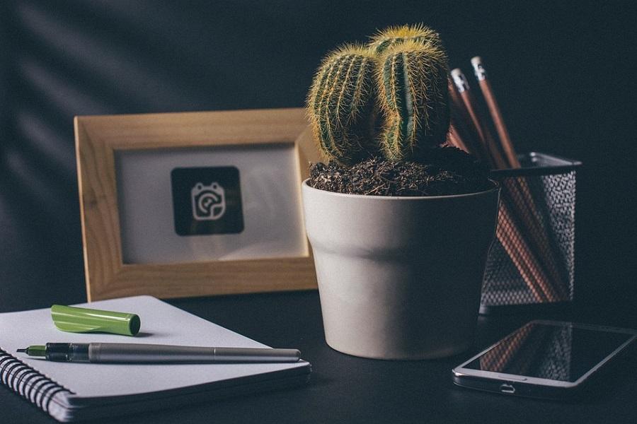 Biljke za ured, kaktus