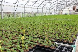Proizvodnja cvijeća Karlovac