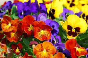 Ljetnice, proljetnice, cvijeće Karlovac