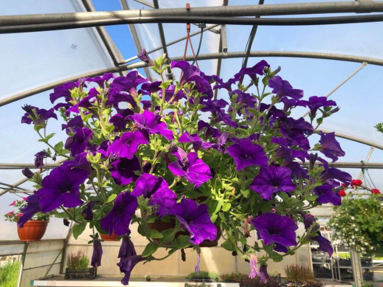 flora-commerce-1420797410.jpg
