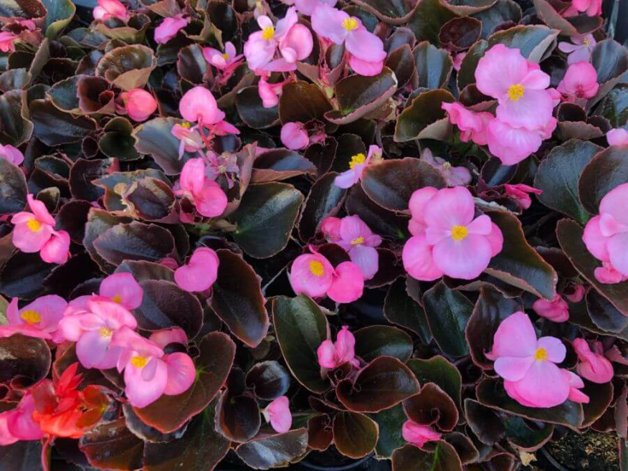 flora-commerce-2101627411.jpg