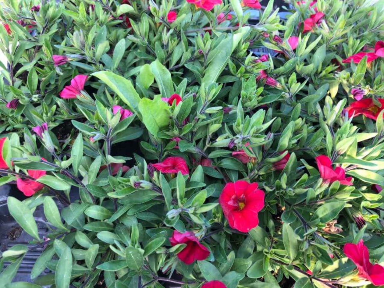 flora-commerce-3338117414.jpg