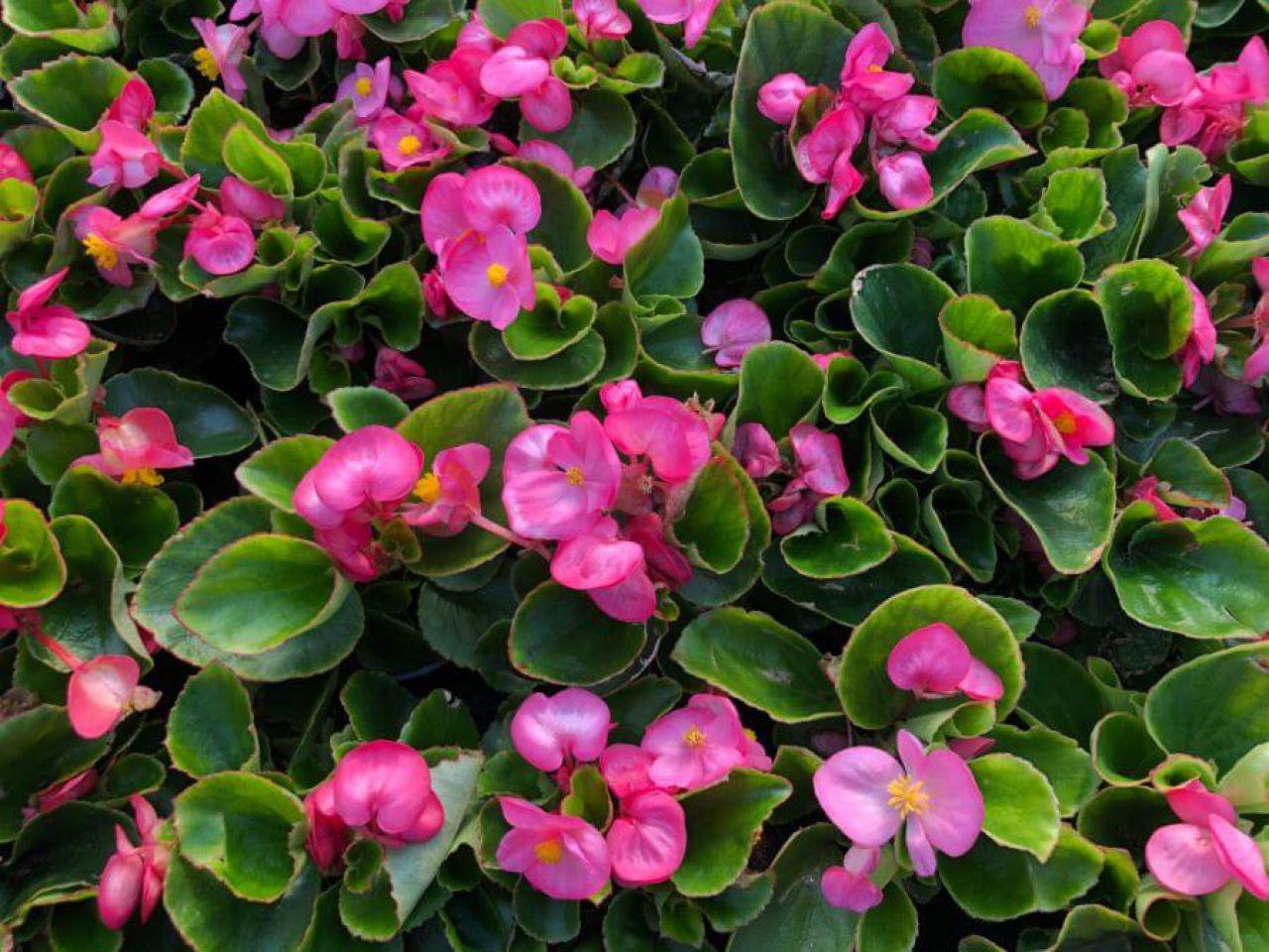 flora-commerce-4778037410.jpg
