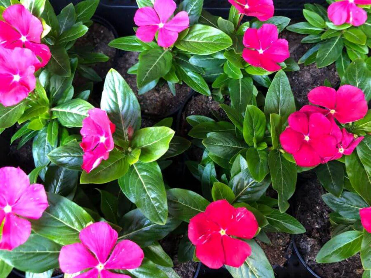 flora-commerce-5936277412.jpg