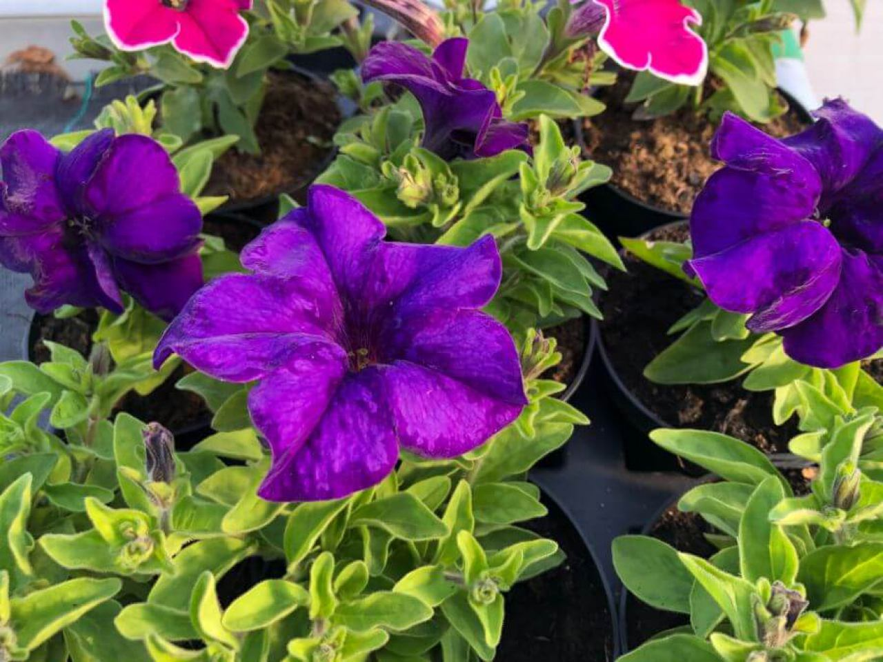 flora-commerce-9131037413.jpg