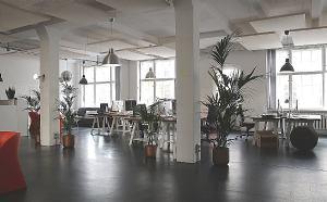 Koje biljke odabrati za ured?