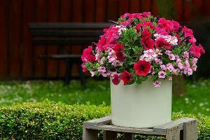 5 biljaka koje će cvjetati usprkos ljetnim vrućinama
