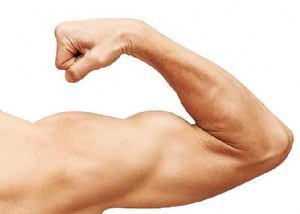 Pogledajte koje namirnice najbolje grade mišiće