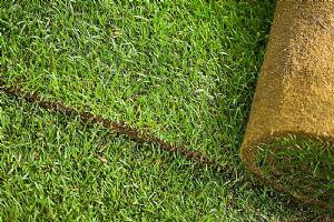 Trebam ponudu za postavljanje trave u roli