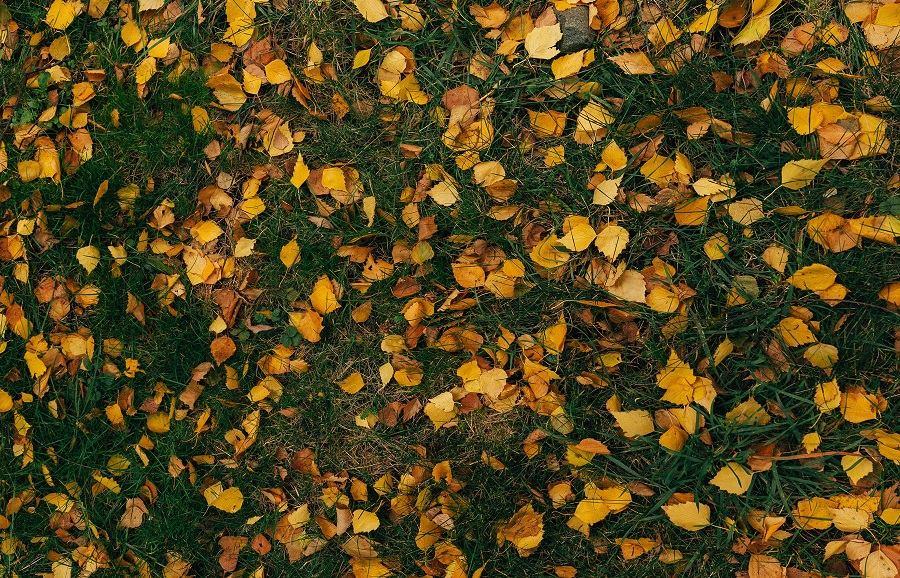 Radovi u vrtu koje biste trebali obaviti u listopadu