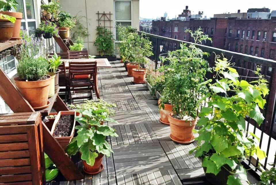 Pogledajte što i kako možete sijati i saditi na vlastitom balkonu ili terasi